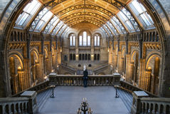 Natural History Museum. Interior of Natural History Museum in London royalty free stock photos