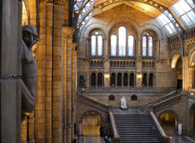 Natural History Museum. Interior of Natural History Museum in London stock image
