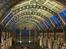 Natural History Museum. Ceiling of the Natural History Museum, London royalty free stock photo