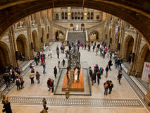 Natural History Museum Stock Photography