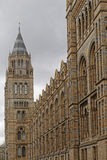 Natural history museum royalty free stock photography