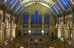 Natural History Museum. London 2014 stock images