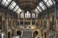 The Natural History Museum of London. LONDON - April 19: The great Central Hall of The Natural History Museum decorated with paintings and fretwork of plants and Royalty Free Stock Photo