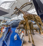 Natural History Museum in London, England Royalty Free Stock Images
