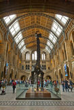 Natural History Museum Royalty Free Stock Image