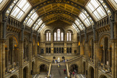 Natural History Museum Royalty Free Stock Images