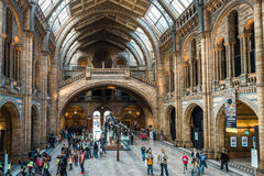 Natural History Museum in London, Europe Stock Image