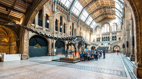 Natural History Museum in London, Europe Royalty Free Stock Images