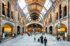 Natural History Museum in London, Europe Royalty Free Stock Photos