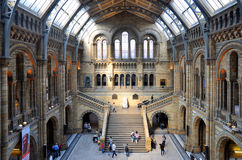 Natural History Museum, London. The main hall, Natural History Museum, London stock image