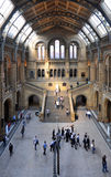Natural History Museum, London. The main hall, Natural History Museum, London Royalty Free Stock Images