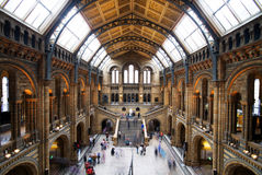 Natural History Museum, London Stock Images