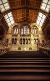 Natural History Museum of London - Steps leading to Evolution Royalty Free Stock Image