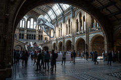 Natural history museum in London. Royalty Free Stock Images