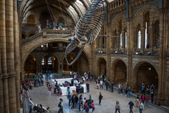 Natural history museum in London. Stock Images