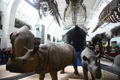 Natural History Museum in London Stock Photos