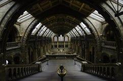 Natural History Museum, London Stock Photos