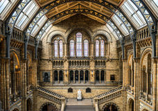 Natural History Museum. Looking down on a statue of Darwin in the great hall of the Natural History Museum Stock Images