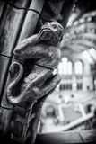 Natural History Museum. Stone monkey at the Natural History museum Royalty Free Stock Photos