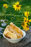 Natural honey in comb Stock Images