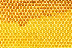 Natural honey in honeycomb background Royalty Free Stock Photos