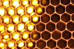 Natural honeycomb Royalty Free Stock Images