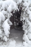 Natural hut in the crown of fir. Finnish Lapland Stock Images