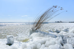 Natural ice sculpture at the water coast Royalty Free Stock Photo