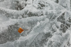 Natural Ice Surface Texture with Fall Leaf. Surface of thick ice layer on lake, weathered by numerous thaw and freeze cycles with brown fall leaf sunken into Royalty Free Stock Photography