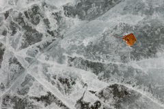 Natural Ice Surface Texture with Fall Leaf. Surface of thick ice layer on lake, weathered by numerous thaw and freeze cycles with brown fall leaf sunken into Royalty Free Stock Photos