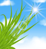 Natural illuminated background with green grass Stock Photo