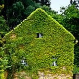 Natural insulation. Natural thermal insulation of an older house. Green ivy is rambling at the facade Royalty Free Stock Photography