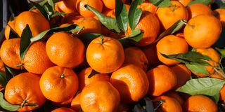 Clementines on the market table. Natural juicy fresh organic citrus fruit with green leaves royalty free stock photo