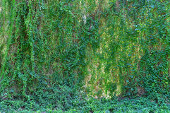 Natural Jungle background. Stock Photo