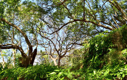 Natural Jungle background. Royalty Free Stock Image
