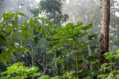 Natural Jungle background. Tropical rain forest in the morning mist Royalty Free Stock Images
