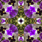 Natural kaleidoscope with motives of flowers. Natural kaleidoscope with natural motives of purple flowers royalty free illustration