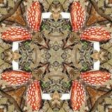 Natural kaleidoscope with motives of mushroom Royalty Free Stock Images