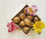 natural, la primavera del alstroemeria de la flor de la suavidad de las codornices eggs Pascua en una caja de madera blanca Imagen de archivo libre de regalías