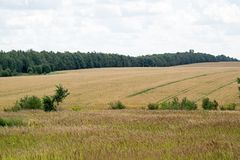 Natural landscape of an agricultural field Stock Images