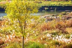 Natural landscape during autumn season Royalty Free Stock Image