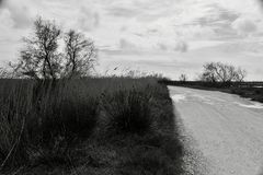 Natural landscape in the Camargue royalty free stock photos