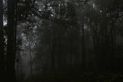 Natural landscape. Dark forest with fog Stock Photography
