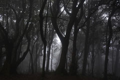 Natural landscape. Dark forest with white fog.  Stock Photos