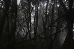 Natural landscape. Dark forest with white fog. Natural landscape. Dark forest with white fog Royalty Free Stock Image