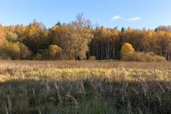 Natural landscape. The edge of the meadow and the forest. Golden autumn, Sunny day, yellowed grass and trees. Feathery clouds in the blue sky stock images