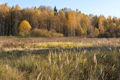 Natural landscape. The edge of the meadow and the forest. Golden autumn, Sunny day, yellowed grass and trees. Feathery clouds in the blue sky royalty free stock photography
