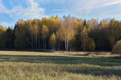 Natural landscape. The edge of the meadow and the forest. Golden autumn, Sunny day, yellowed grass and trees. Feathery clouds. Natural landscape. The edge of stock images