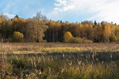 Natural landscape. The edge of the meadow and the forest. Golden autumn, Sunny day, yellowed grass and trees. Feathery clouds in the blue sky royalty free stock photos
