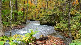 Natural landscape of the forest in Oirase Gorge in autumn season